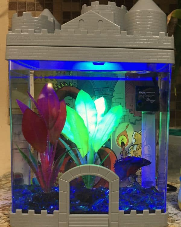 Robert 39 s first pet fish from petsmart stylish cravings for Betta fish tanks petsmart