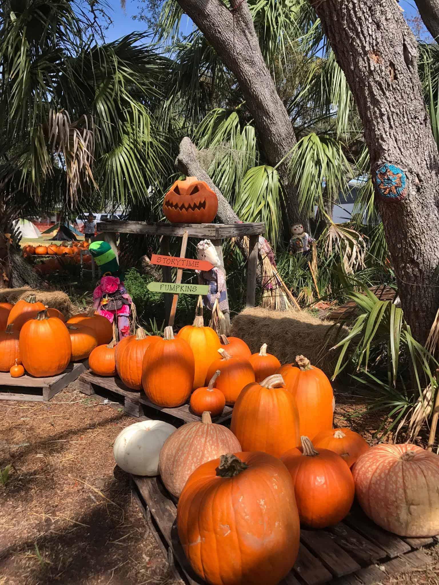 Pumpkin Picking Fun